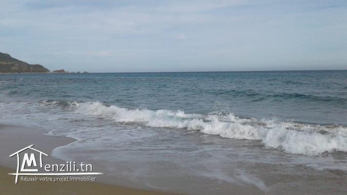 أراضي على البحر  تبعد 700 م على البحر : الشط القبلي