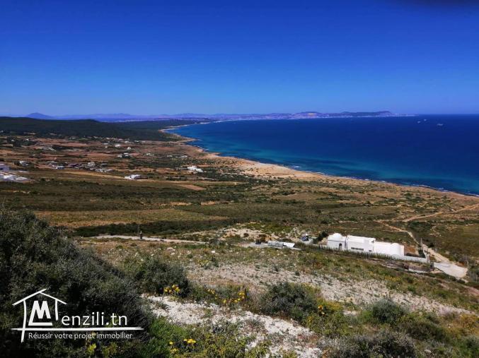 terrain à demna metline Bizerte