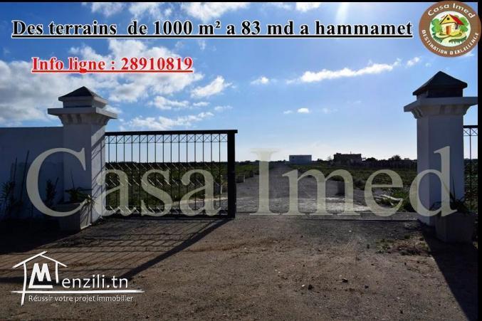 terrain a hammamet de 1000 m2