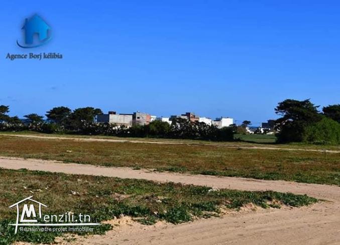 Terrain à Dar Allouch Kelibia 95829120