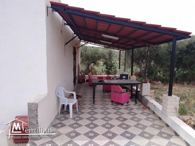 une ferme à Zaghouan bir hlima et maison s+2