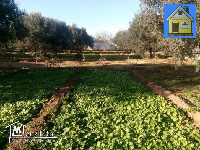 AV une petite ferme 3800 m² à sidi hamed hammamet