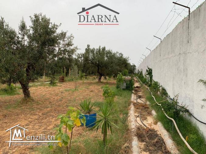 un terrain agricole de 3566 m²