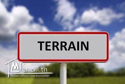 Terrain à vendre à Mezreya.