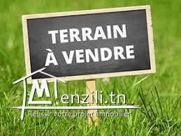 terrain agricole titré 25000 m² à SIDI BOU ALI sur la route Société laitière ELBENE
