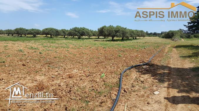 Terrain agricole 7042 m² à kerkouane kelibia
