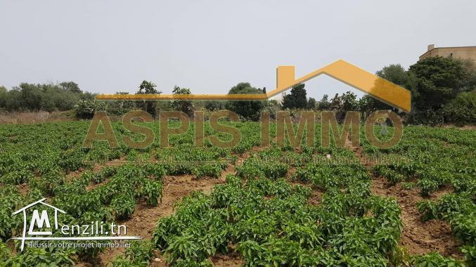 Terrain d'habitation 313 m² à cité ksiba kelibia