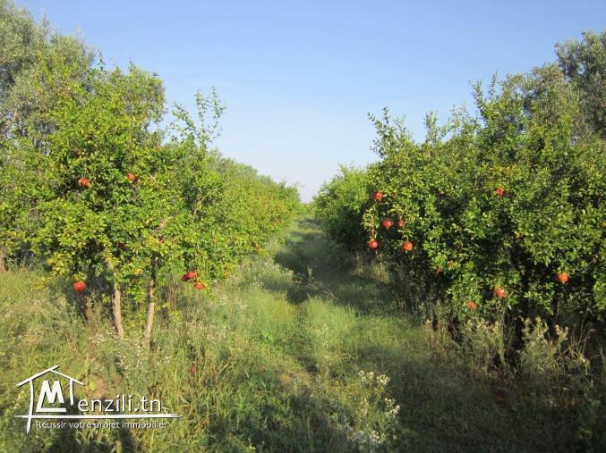 SANIYA 3.4 hectare à KALLA KIBIRA BOURA titré