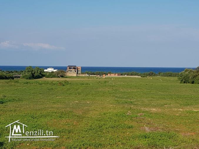 Terrain vue sur mer à kélibia kerkouane