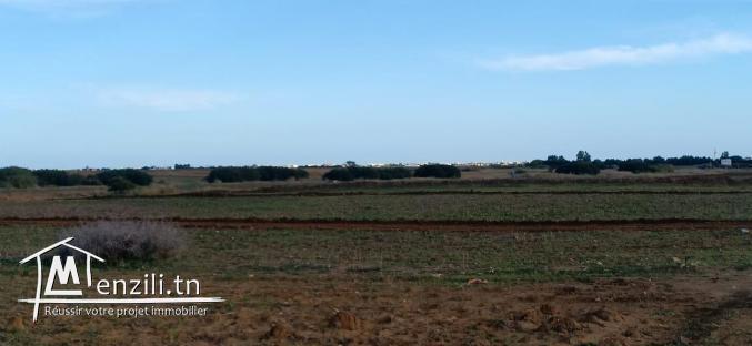 un terrain hammemet