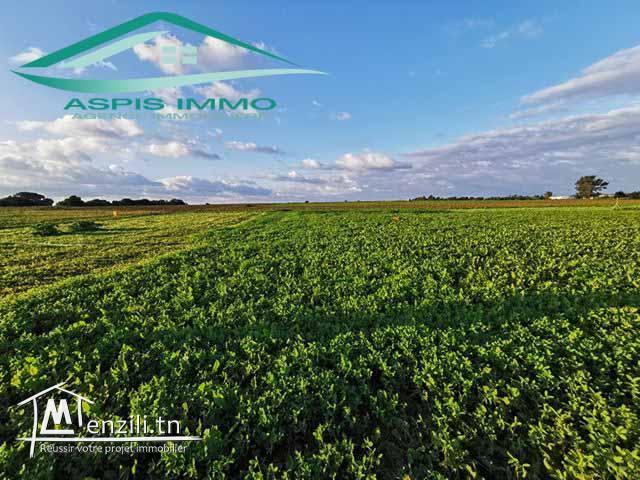 Terrain agricole 8474 m² à Kelibia