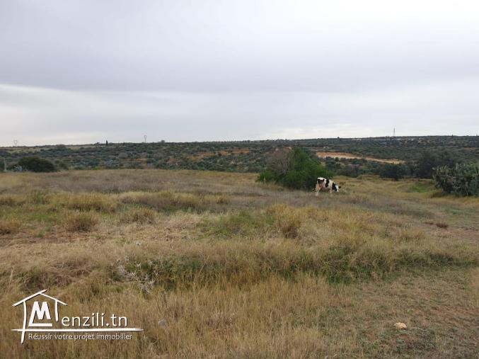 Terrain agricole à kalaa kobra