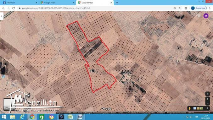 22 hectare zitoun