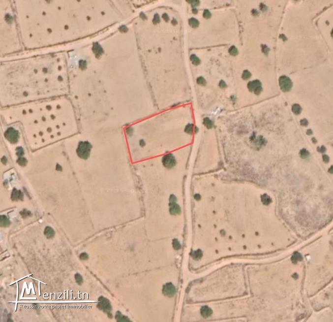 1100m2 Mezraya +permis de bâtir