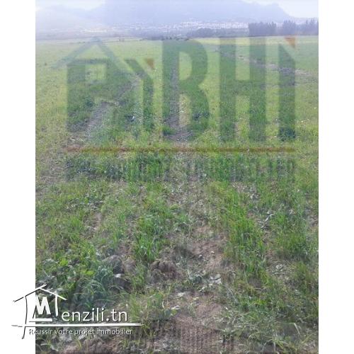 5 hectare à vendre