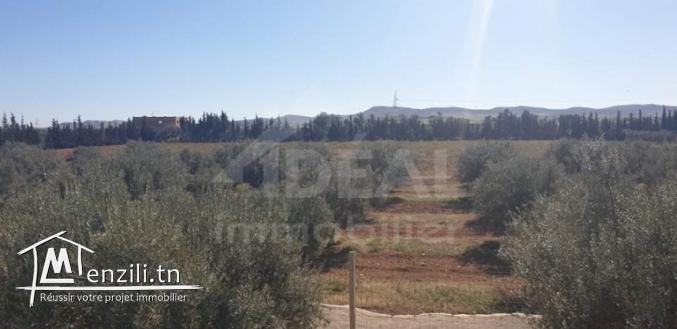 Ferme de 08 hectares à Borj El Amri