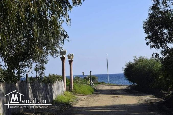 Terrain à Tamazrat