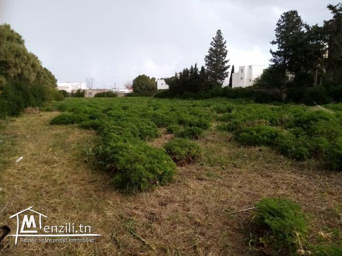 Lotissement des terrains à La Marsa