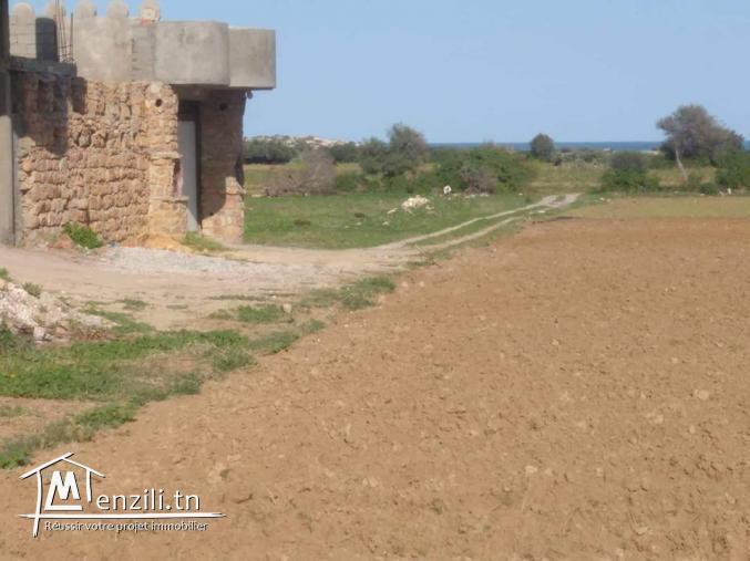 A vendre un terrain agricole à kelibia mansoura
