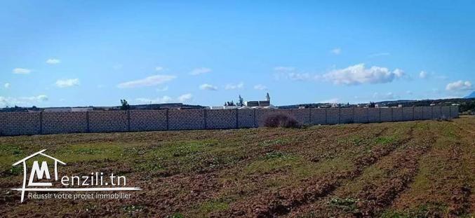 un terrain à Hammamet