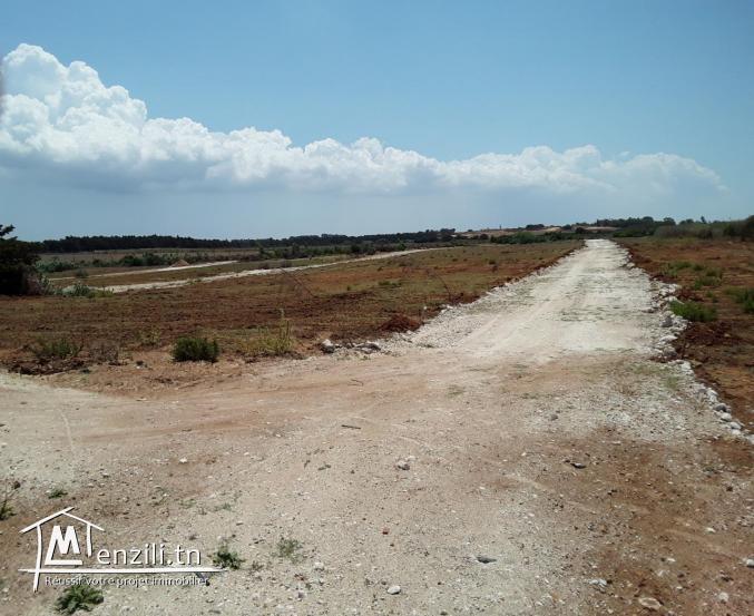 Terrain 1000m² à 40.000 dt : El_Haouaria