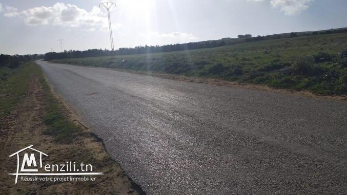 4 hectare à tamezrat kélibia