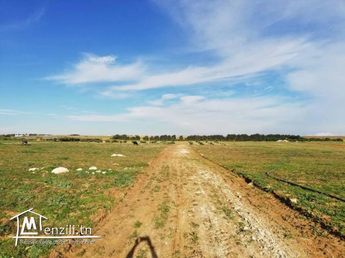 terrain en plein nature à 5 km de kélibia