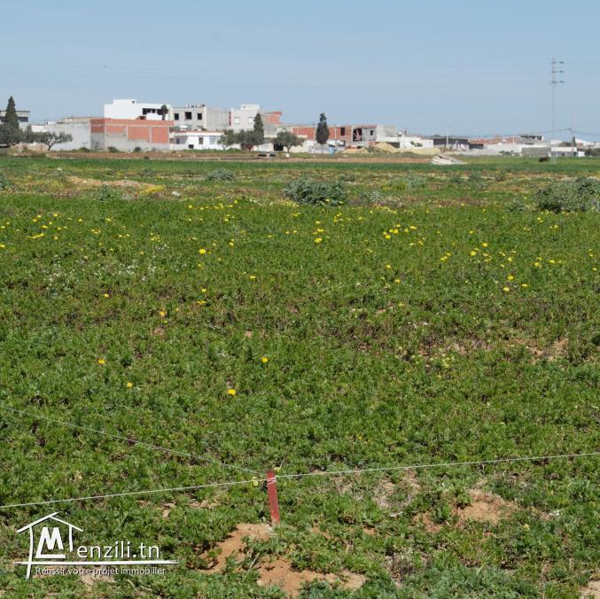 أرض في قليبية 250 م