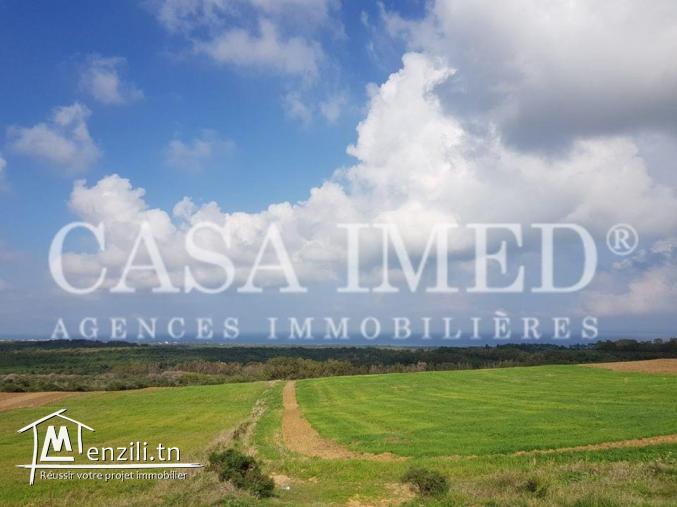 un terrain à 5 km de kélibia