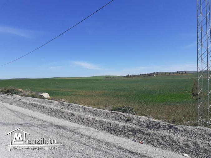 terrain agricole a mournaguia