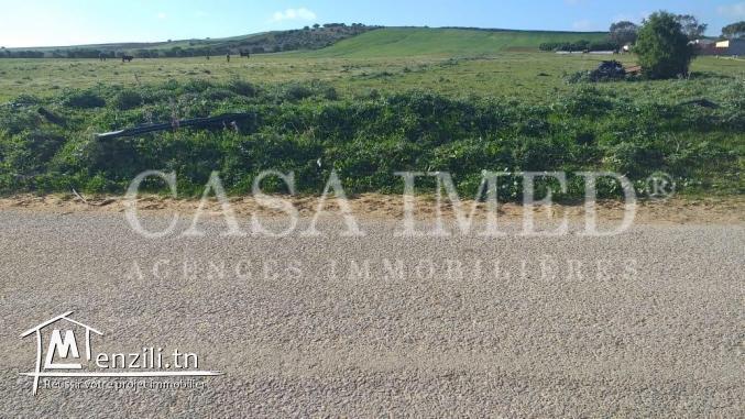 terrain à tamzrat de40000 m²