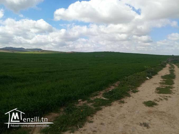 terrain de grande culture de 355 hectares