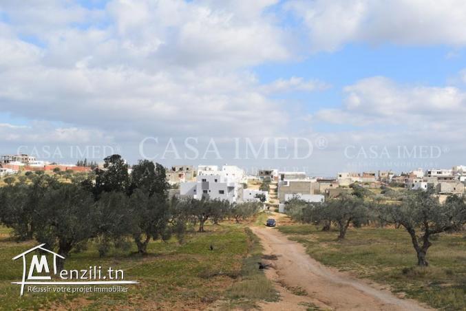 Terrain agricole à Hammamet