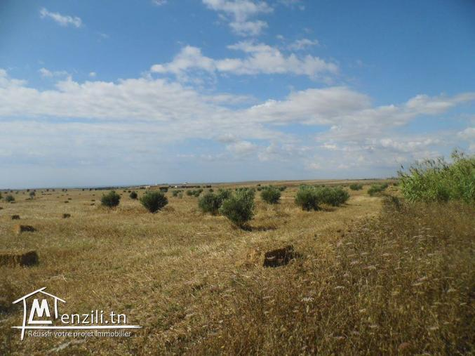 Terrain à Manzel Brahim, 4km de kélibia
