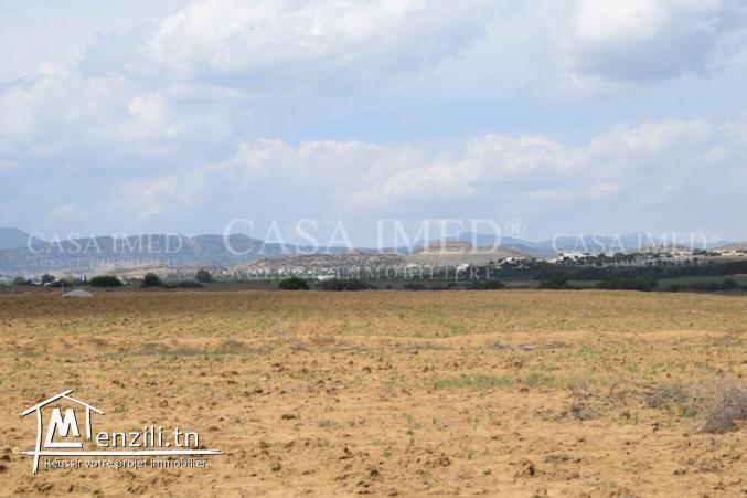 des terrain pour investissement à hammamet sud