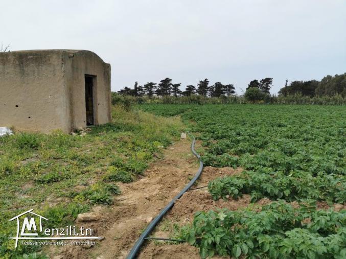 terrain agricole 21540 m² à haret chouara dar allouch