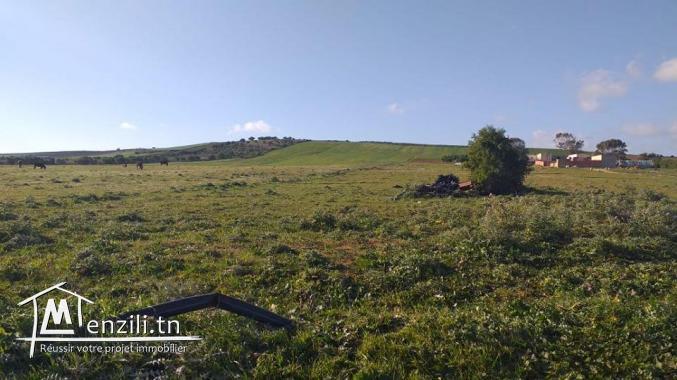 A vendre 4 hectares à tamzrat kelibia