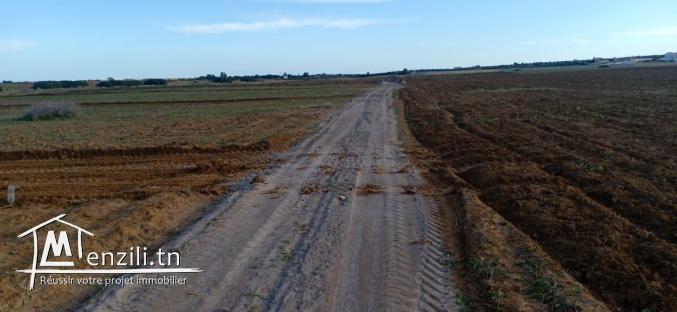 Terrain en plein nature à 4km du Kelibia