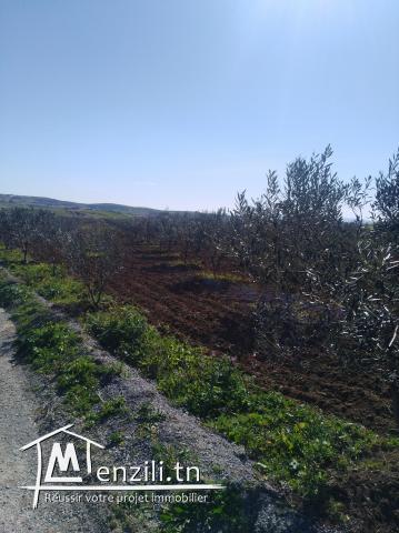 terrain de 116 hectares firma