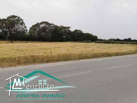 terrain 2000 m² sur route principale kelibia hawaria