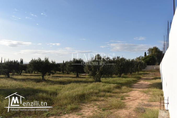 AV un terrain situés à Craxi Hammamet.