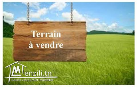 Terrain à vendre a Feriana