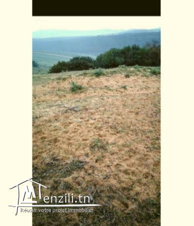 ارض للبيع ببنزرت