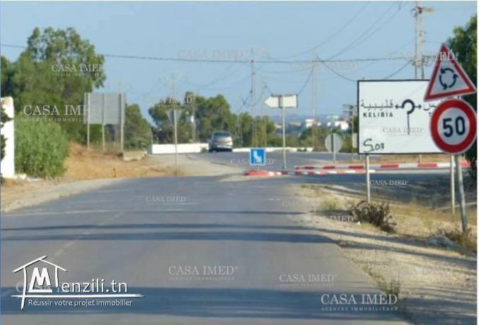 Terrain à l'entrée de Haouaria sur la route principale