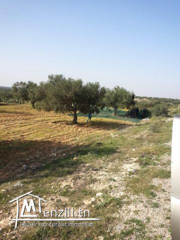 terrain 3.74 hectare au banlieue de monastir