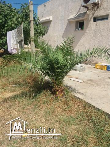 vente palmier de décoration. 56243726