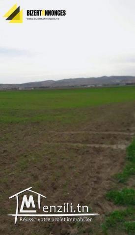 A vendre un beau terrain agricole à Hriza Alia Bizerte