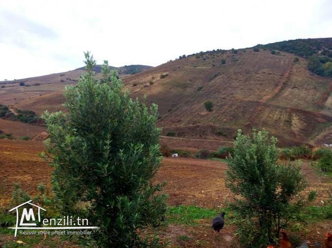 A vendre terrain agricole Bizerte Mateur Superficie: 44hectares
