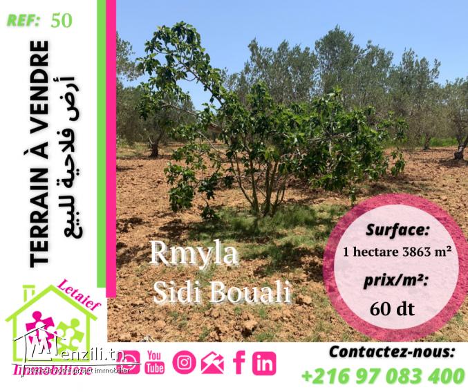 RFT TA 50 :A_Vendre un Terrain a Rmyla Sidi Bouali