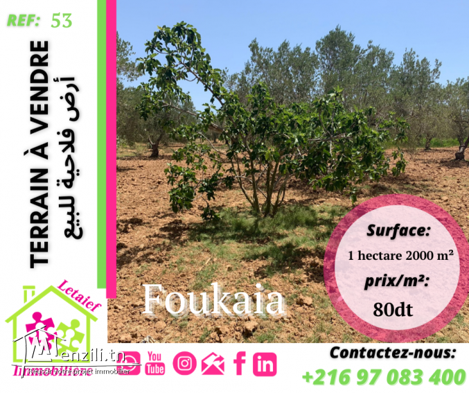 FT TA 53::1 hectare 2000 m²